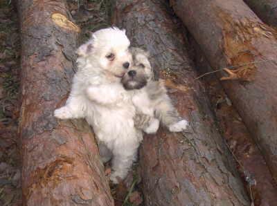 Welpen auf Baumstamm