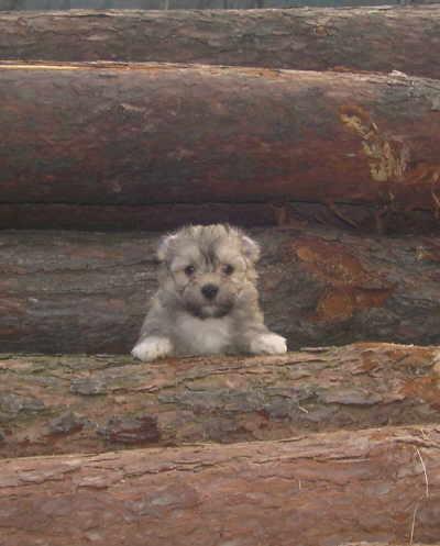 Welpe auf Baumstamm