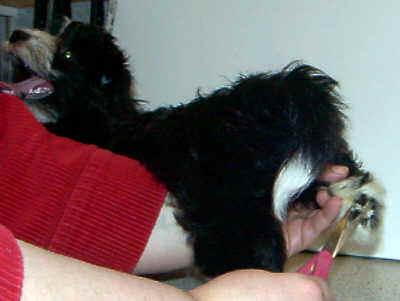 Hund festhalten bei der Pflege