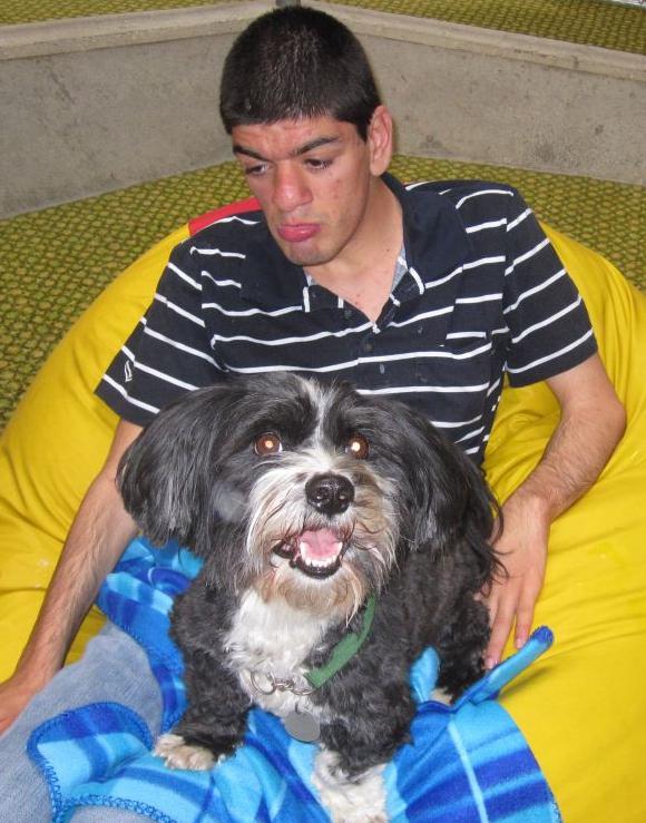 Havaneser Therapiehund mit Behinderten