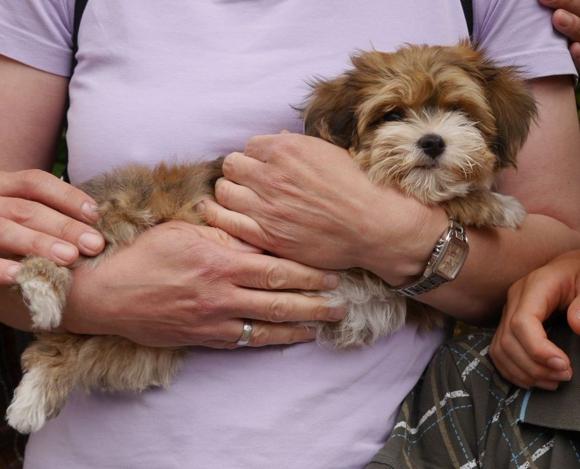 Schulhund Emil im Arm