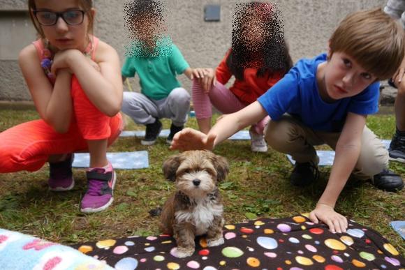 Havaneser Schulhund Emil mit Kindern