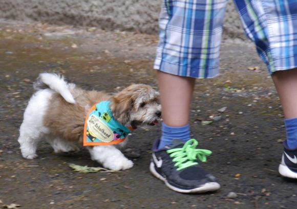 havaneser Schulhund Emil