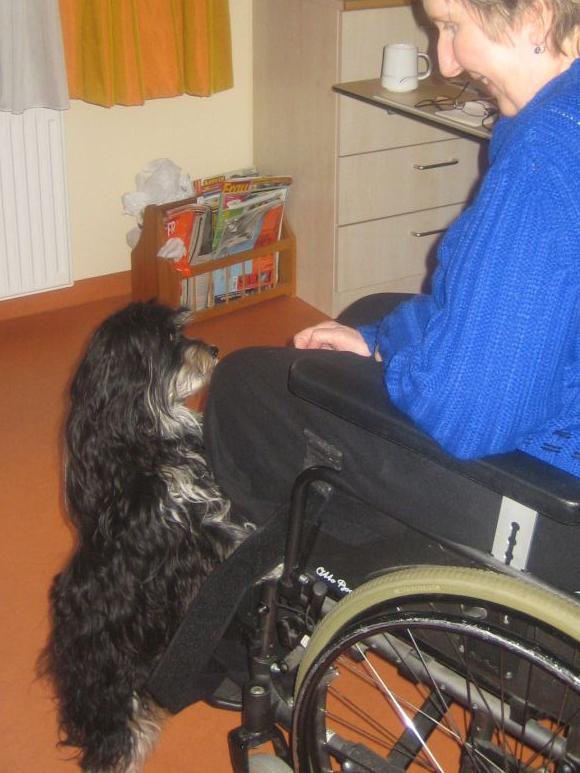 Therapiehund mit Rollstuhlfahrer