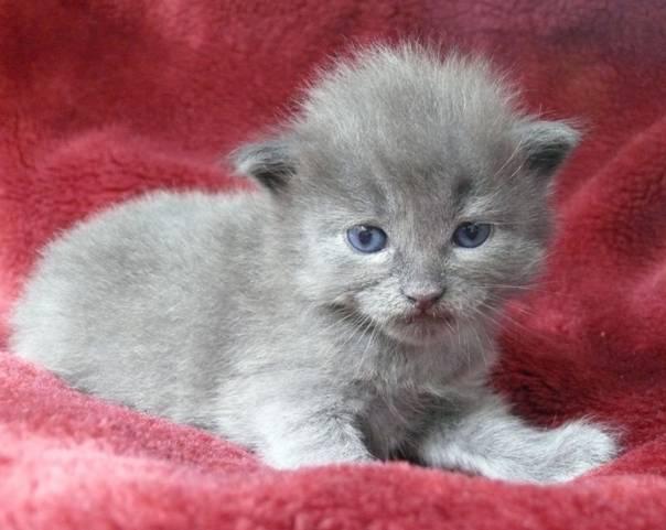 Katzenjunges Karli