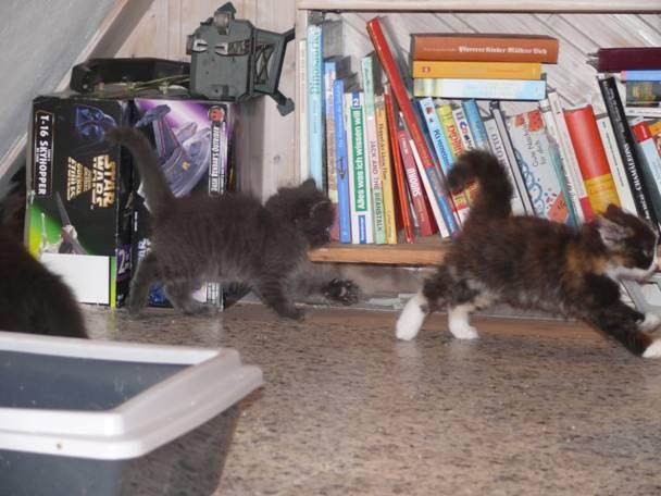Katzen laufen