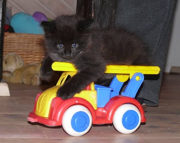 Katze mit Auto
