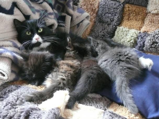 Katze Fluffi mit Jungen