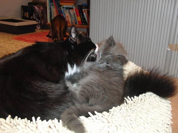 Katzen im Spiel