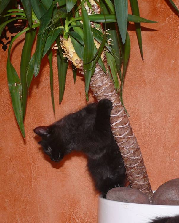 Katze in Palme