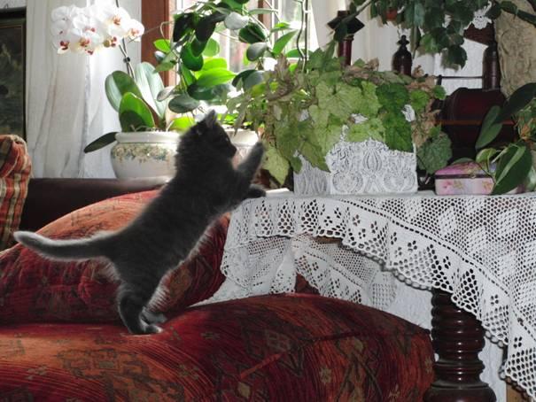 Katze und Blumentopf