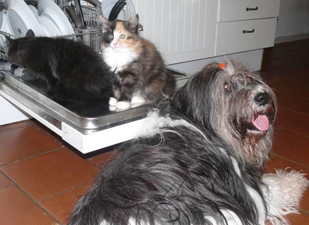 Katzen in Spülmaschine