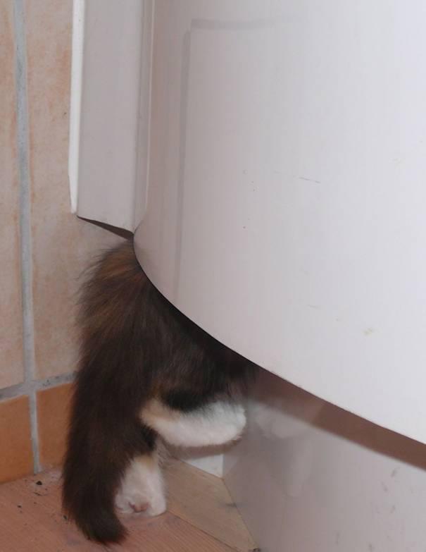 Katze unter Schrank