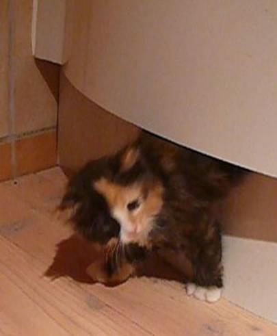 Katze unter Küchenschrank