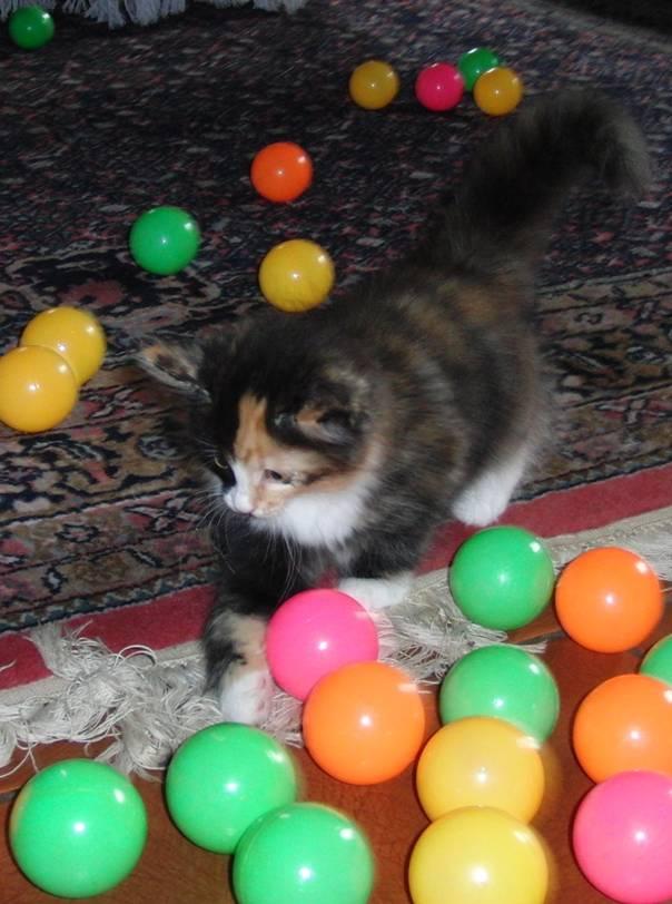 Katze mit Bällen