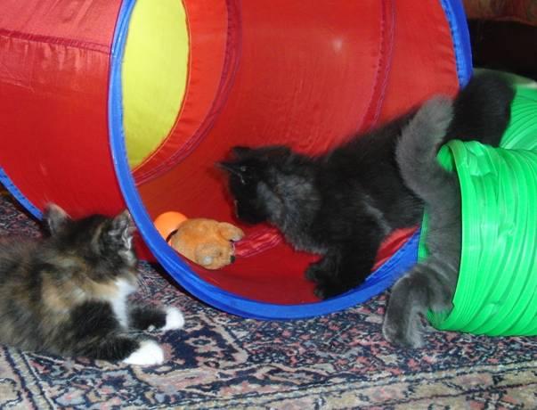 Katzen im Katzentunnel
