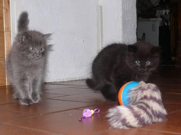 Katzen mit Spielzeug