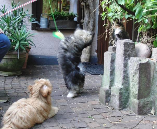 Katzen mit Hundewelpen