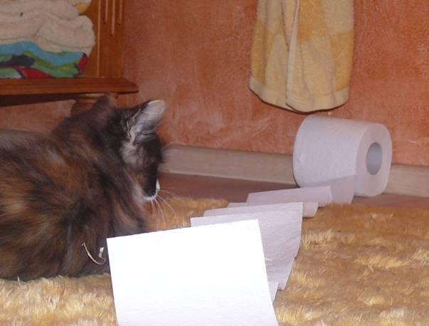 Katze mit Klopapier