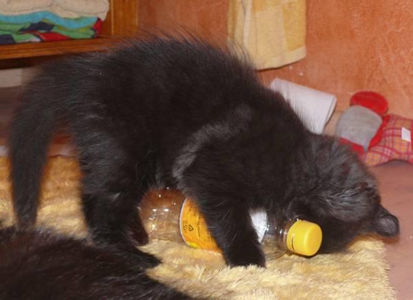 Katzenjunges mit Flasche