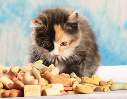 Katzenjunges mit Leckerlie