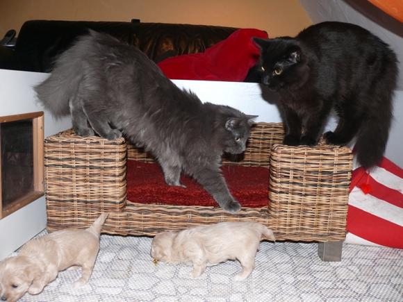 Katzen mit Welpen